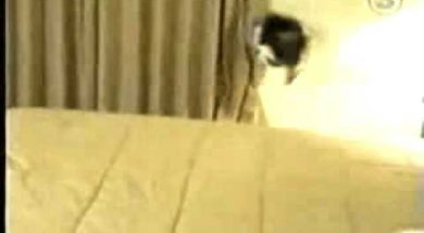 Cat Runs in Fear Crashing Into Wall.